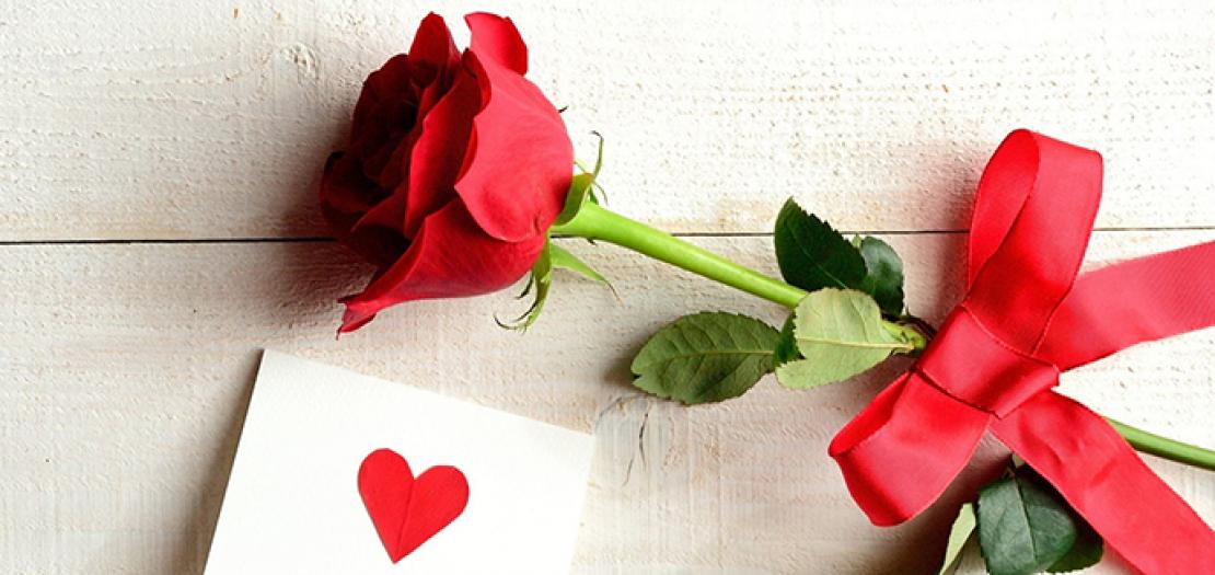 في عيد الحب لن تفرحها وردة حمراء، لكنها لن تنسى أن من تحب حمل لها تلك الوردة ليذكرها بأنه لا يزال يحبها