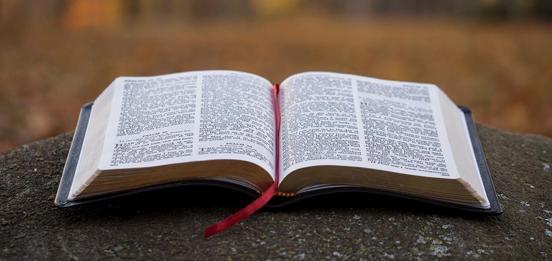 ما أتيت لأنقض بل لأتمم. فشريعة يسوع الجديدة، تختلف عن شريعة الغاب، لأنها تتميم لإرادة الله