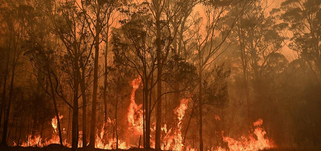 يقول العلماء إن سبب الحرائق يعود الى الجفاف وتفاقم الظروف الجوية غير المناسبة بسبب التغيّر المناخي