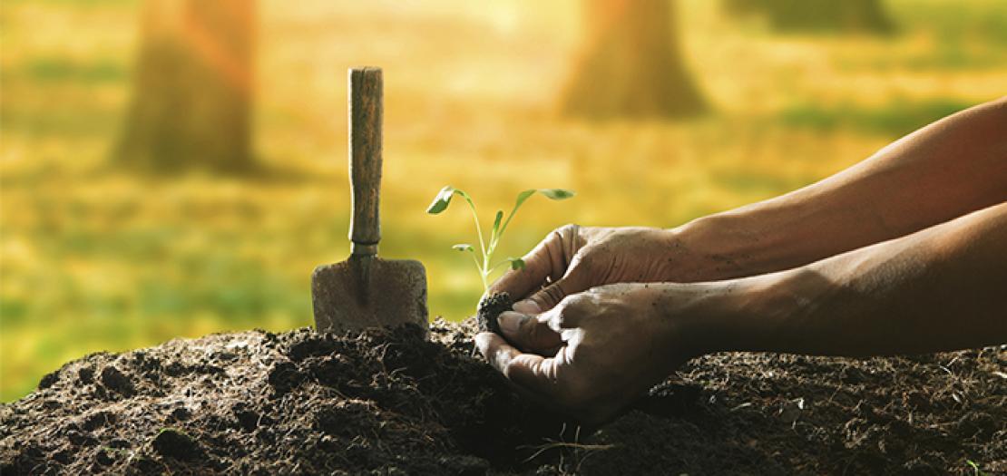 ألم تزرع زرعًا جيدًا؟
