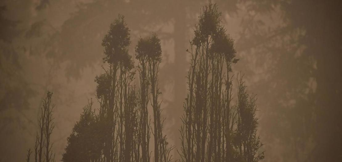ضباب دخاني كثيف في إستيكادا في ولاية أوريغون، 12 أيلول 2020